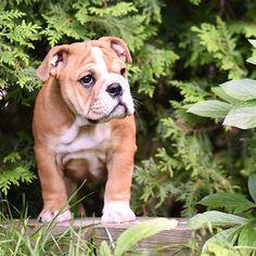 #actijoy #dog #puppy #cuteanimals