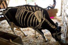 bones alive