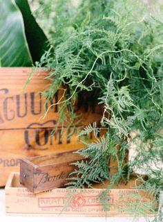 ferns wedding centerpiece | jenhuang