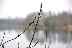 Foto: Ben Saanen / Budel-Schoot. 19-03-2015