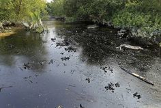Sundarbans: Bangladesh begins oil clean-up with sponges and sacks - The Times of India