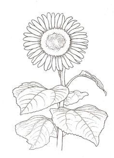 1000 images about embridery on pinterest flower for Kentucky state flower coloring page