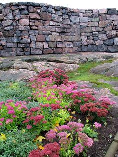 flowers in Helsinki, Finland