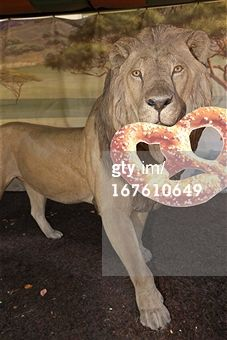 Search - Getty Images : CA: Snyders of Hanover Celebrates National Pretzel Day At The San Diego Zoo