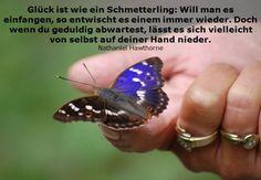 Glück ist wie ein Schmetterling (Nathaniel Hawthorne) #quote #zitat #lebensweisheit