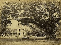 Silk Cotton Tree, Botanical Gardens, Port of Spain, Trinidad | by The Caribbean Photo Archive