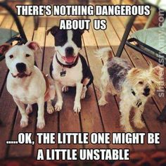Dangerous Dogs - https://shareitsfunny.com/dangerous-dogs/ - Funny Pictures on  Share Its Funny  #dangerousdogs