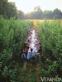 Vineyard Wine Tasting & Lunch