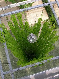 MFO Park Living Walls 'Column' Feauting plant (Ampelopsis veitchii)