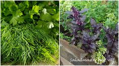 Saladmaster helt vilt: urter