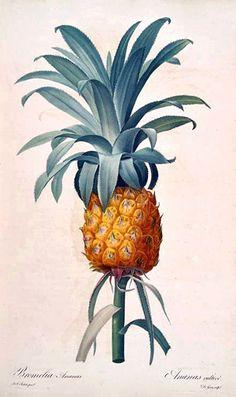 Vintage pineapple recipes!