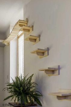 The Cats Adventure Bridge will give your cat a lot of fun. My cat loves to lie o… The Cats Adventure Bridge will give your cat a lot of fun. My cat loves to lie on it to get some sunshine. Cats cant get enough of that. Cat Trees Diy Easy, Diy Cat Tree, Cat Wall Shelves, Cat House Diy, Cat Steps, Cat Playground, Super Cat, Cat Enclosure, Reptile Enclosure