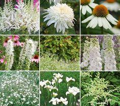 Moon Garden:  Fraises des Bois Strawberries (6)  Astilbe x arendsii 'Bridal Veil' (1)  Astilbe chinensis 'Vision in White'  (1)  Leucanthemum x superbum 'Ice Star' (1) Iris sibirica 'Gull's Wing' (1)  Gypsophila paniculata 'Bristol Fairy' (1)  Liatris spicata 'Alba' (1)  Echinacea purpurea 'PowWow White' (1) Delphinium 'Centurion White' (3)
