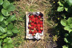 Endlich Sommer: Erdbeerkuchen mit Keksboden – luvundlee