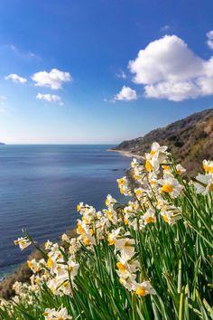 香り風に漂う ここは淡路島は、灘黒岩水仙郷である。  朝の陽光を浴びて、 冬の風に漂う水仙の甘い香りに包まれている。  白く降り注ぐ陽光は、空と雲を白く光らせ、水仙の白を際立たせていた。