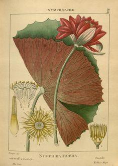 v. 1 1840 - Illustrations of Indian botany : - Biodiversity Heritage Library