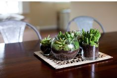If you are free friends and don't know how to spend time, get creative with miniature DIY terrarium ideas and make some small and beautifully designed garde Terrarium Diy, Coffee Table Terrarium, Simple Home Decoration, Plant Table, Hanging Succulents, Deco Originale, Home Decor Hacks, Mini Plants, Terraria