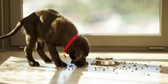 Top tips on keeping your pets healthy - how to maintain your dog or cat's health