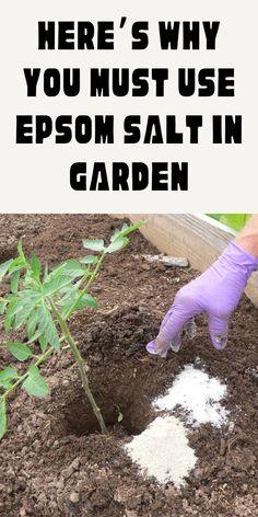 Garden Shrubs, Garden Soil, Garden Care, Lawn And Garden, Garden Insects, Garden Weeds, Garden Ideas To Make, Garden Yard Ideas, Diy Garden Projects