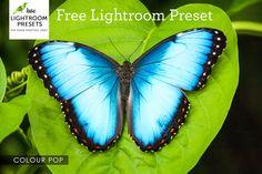 Free Lightroom Preset | Colour Pop – Love Lightroom Presets