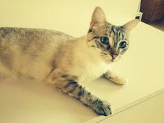 Virva Cat | Pawshake