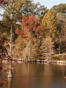 7b3881d07940d7178be60c30a4cf4d2e - Louisiana Purchase Gardens & Zoo Monroe La