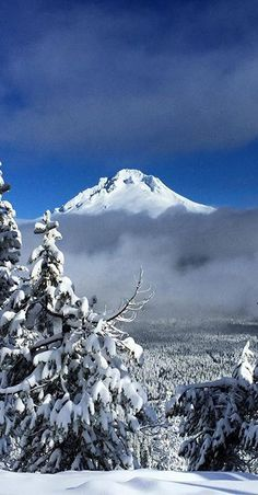 Government Camp, Snowy Pictures, Ski Season, National Forest, Winter Wonderland, Oregon, Skiing, Waterfall, Scenery