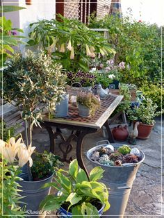 My favourite place for garden decoration / Mi lugar favorito para decoraciones de jardin