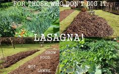 How to Make a No-Till, No-Dig, Organic Lasagna Garden Lasagna gardening is a no-dig, no-till organic gardening method that results in rich, fluffy soil with very little work from the gardener. Backyard Vegetable Gardens, Container Gardening Vegetables, Garden Soil, Backyard Farming, Garden Bed, Garden Tips, Garden Ideas, No Till Garden, Gemüseanbau In Kübeln