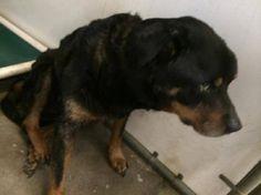 Bruno >>  Shelter friend took him Elizabethtown vet hospital in NC, getting care, needs donations.