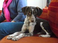 Nederland! Pully (Poulopitha) geboren december 2006 zoekt een rustig huisje. Een huisje waar het veilig is en waar de bewoners meer knuffelaars zijn dan wandelaars. Het liefst niet in het bezit van kleine kinderen of kat(ten). Een andere hond geen probleem. Klik op de link voor meer informatie!