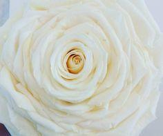 21826953_1428293307249288_5007280294827393024_n Flower Studio, Party, Flowers, Desserts, Food, Dekoration, Tailgate Desserts, Deserts, Essen