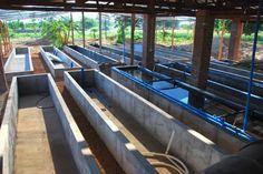 Aquaponic Fish Farming : Aqua Farming – Environment Friendly ...