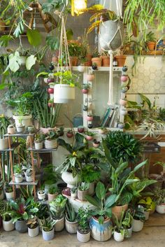 Join us for a virtual visit of London& most famous plant shop: Conservatory Archives. For a minute you& feel like in a real tropical jungle, where you can actually buy all the plants to take home with you! Inside Garden, Inside Plants, Room With Plants, House Plants Decor, Plant Decor, Terrace Garden, Indoor Garden, Indoor Plants, Plant Aesthetic