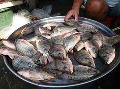 9 Pescados que debes evitar | Tips y Actualizaciones - Todo-Mail