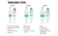 There are three main body types: ectomorph, mesomorph, and endomorph. You can be a combination of body types, but will predominantly be one over the other. These body types are general groupingsof body make-ups, as well asmuscle and fat storage anddistribution.  An ectomorph is characterized by long and thin muscles and limbs, naturally thin ...