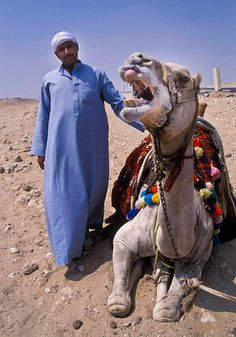 Camel driver with one of his camels; Egypt.  The Galabeya is a tunic worn by Egyptian men. It is also worn by monks and bishops of the Coptic Church.