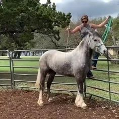 8 Biggest Horses and Horse Breeds in the World. Let's check out some of the biggest horse breeds and individuals in the world. Big Horses, Horses And Dogs, Black Horses, Cute Horses, Pretty Horses, Horse Love, Show Horses, Beautiful Horses, Animals Beautiful