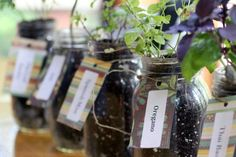 Create a mason jar herb garden in your home with this beautiful indoor garden ideas! Make sure you test out any one of these herb garden ideas! Mason Jar Herbs, Mason Jar Herb Garden, Mason Jars, Canning Jars, Herbs Garden, Container Gardening, Gardening Tips, Herb Container, Indoor Gardening