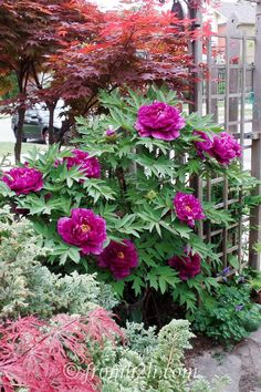 10 Bushes to Plant Under Trees | Have a shady spot where you would like to grow some bushes? Not sure what will grow there? Click here to get a list of 10 different options.