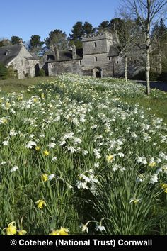 Cotehele (National Trust) Cornwall