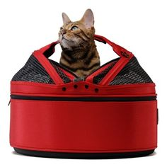 Sleepypod - Strawberry Red $180. Accessories available, such as a heating pad...