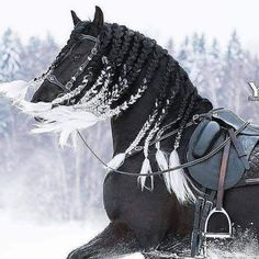 Hair tips What happened here? Black horse with braided white tipped mane. Black horse with braided white tipped mane. Beautiful Horse Pictures, Most Beautiful Horses, Animals Beautiful, Beautiful Beautiful, Cute Horses, Pretty Horses, Horse Braiding, Horse Mane Braids, Mane Hair