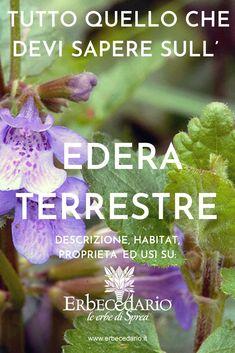 Pasta Al Pesto, Pink Flowers, Home And Garden, Herbs, Vegan, Herbal Medicine, Stars, Sky, Plants