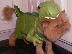 Tyrannosaurus Cat...too cute!!