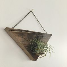 Handmade out of beautiful reclaimed cedar wood, this air plant holder hangs from a brass chain and has gold leaf edging.