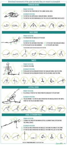 Directional movement of the spine infogr