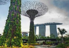 Supertree Grove in Singapore consists of 18 vertical gardens eleven of which have environmentally sustainable functions including solar energy and rain water collection for irrigation. The trees are host to over 200 species of plant including orchids and tropical climbers. The trees have various different planting schemes resulting in the trees having different colour schemes once they flower.