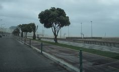 O Palhetas na Foz: Chuva de manhã e vento à tarde causaram hoje algun...