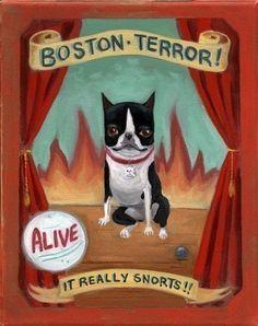 Circus Sideshow - Boston Terrier dog art print. $16.00, via Etsy.